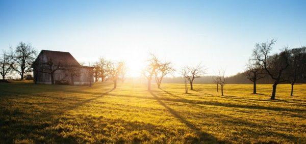 「早起きは三文の徳」から学ぶ活力が蘇る7つの習慣