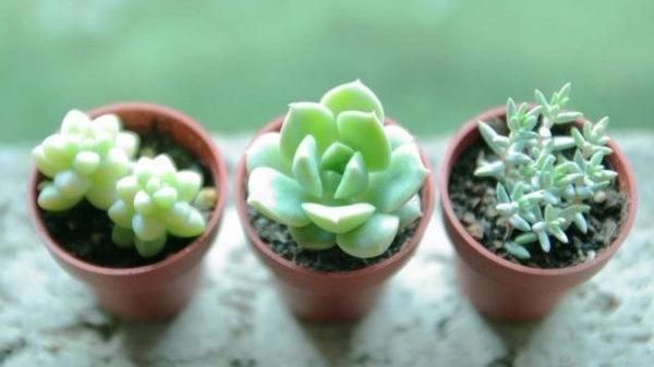 多肉植物の季節ごとの水やりを知って元気に育てるコツ